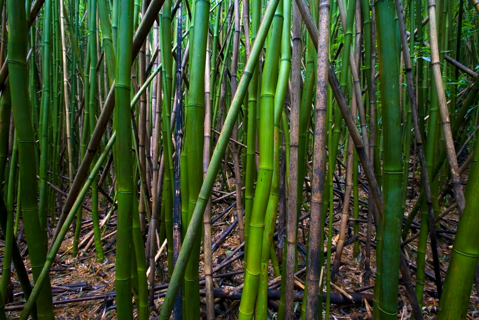 Scott Mead Photography | Bamboo You