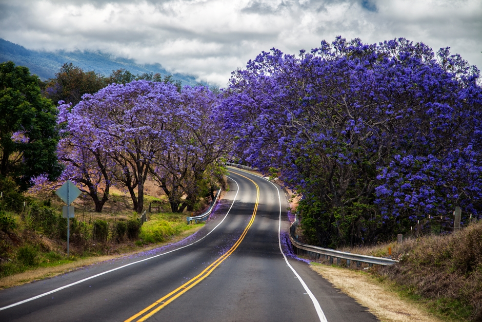 Scott Mead Photography | Jacaranda Road