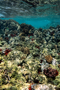 Keawakapu Coral Garden LORES | Scott Mead Photography