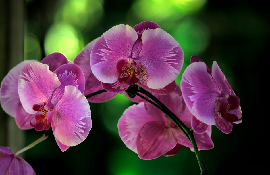 Scott Mead Photography | Orchid Veil