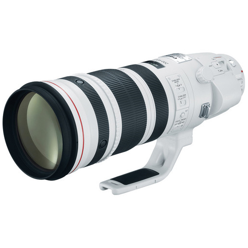 Canon 200-400mm with 1.4 Extender