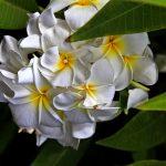 Flower | Scott Mead Photography