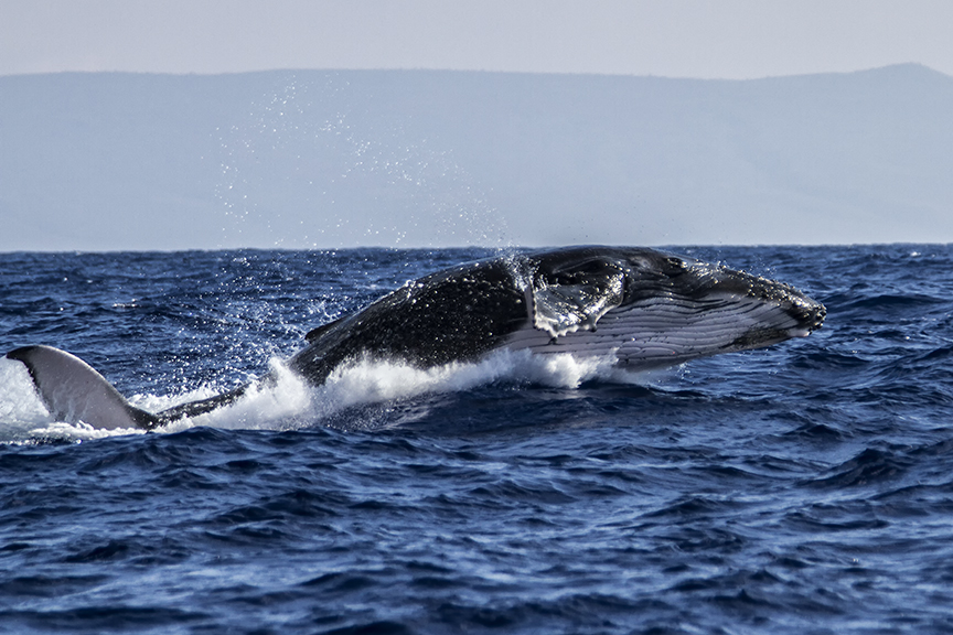 Whale Expedition | Scott Mead Photography