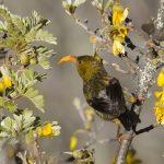 Natural Habitat | Scott Mead Photography