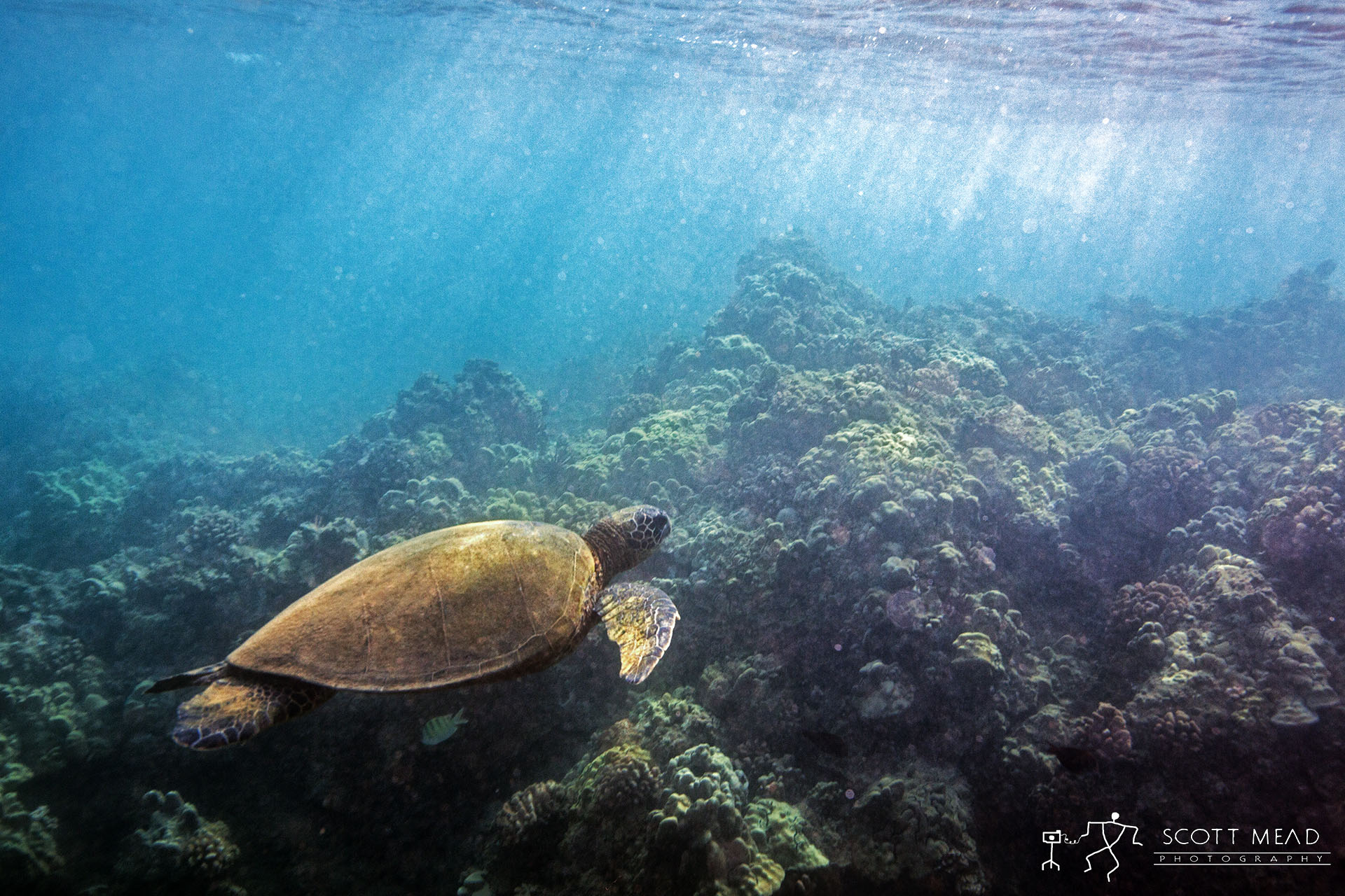 Turtle at Sea | Scott Mead Photography