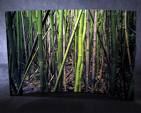 Gallery Glass Bamboo You Lores