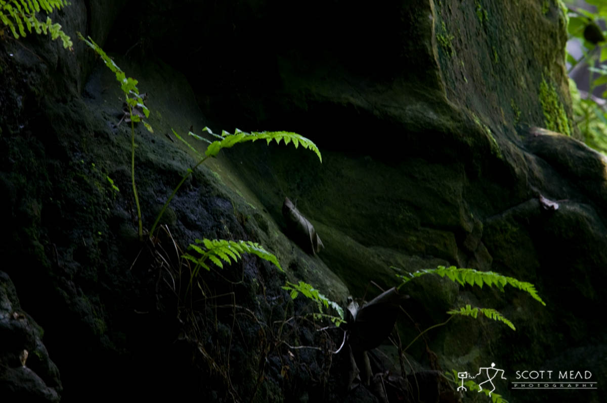 Scott Mead Photography | Baby Ferns