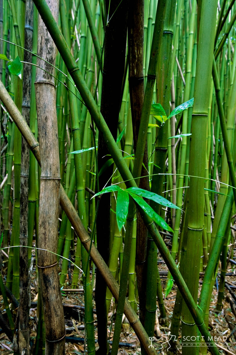 Scott Mead Photography | Bamboo  Stand  1