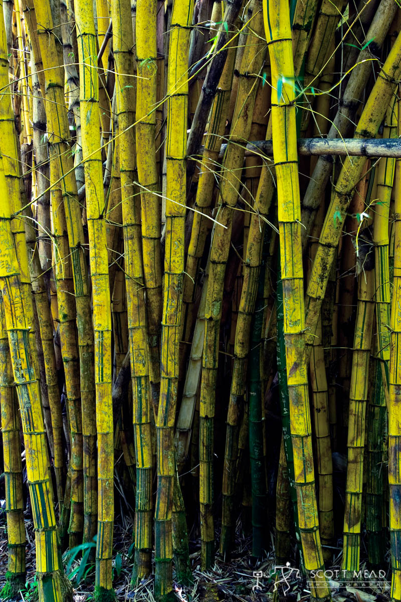 Scott Mead Photography | Bamboo  Stand  2