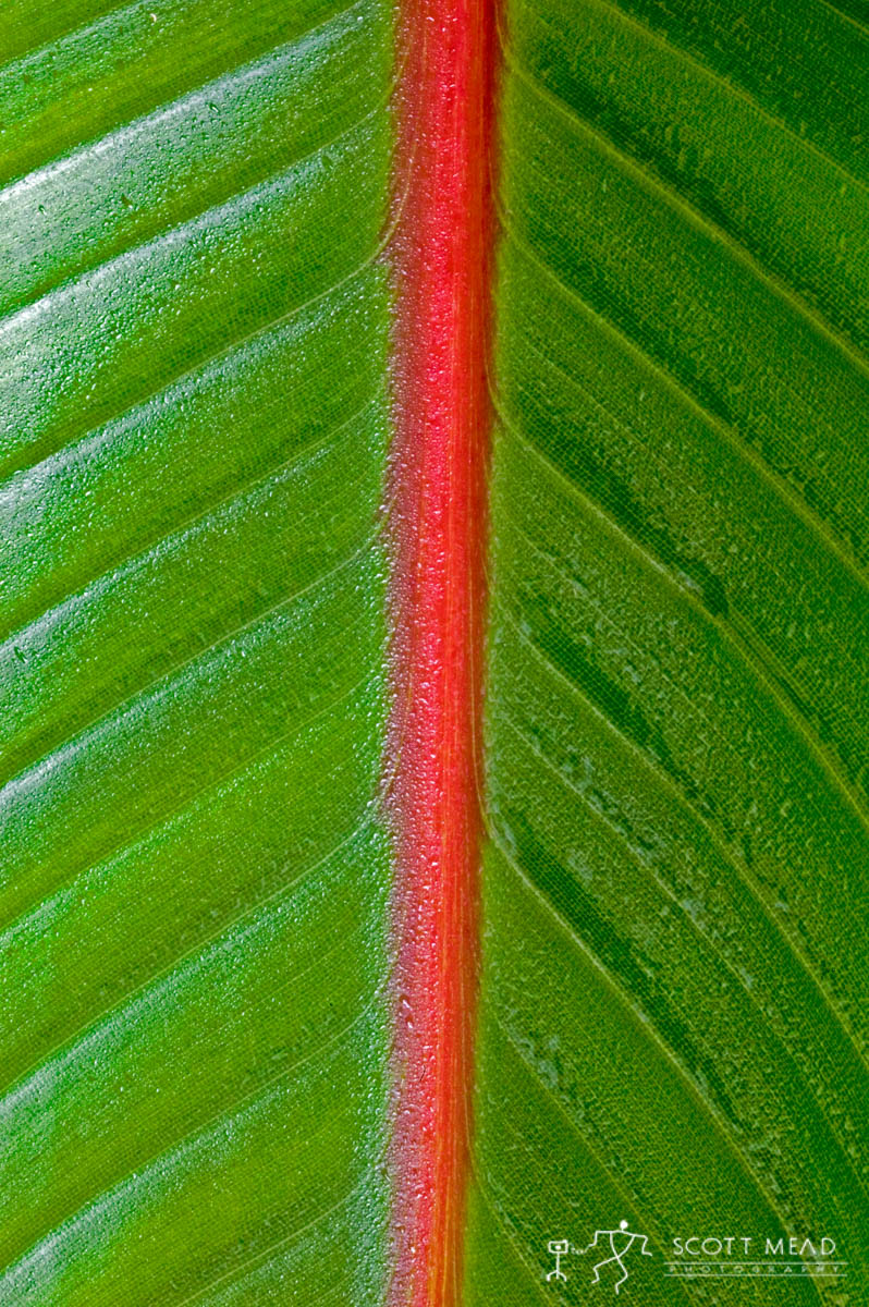 Scott Mead Photography | Banana  Leaf