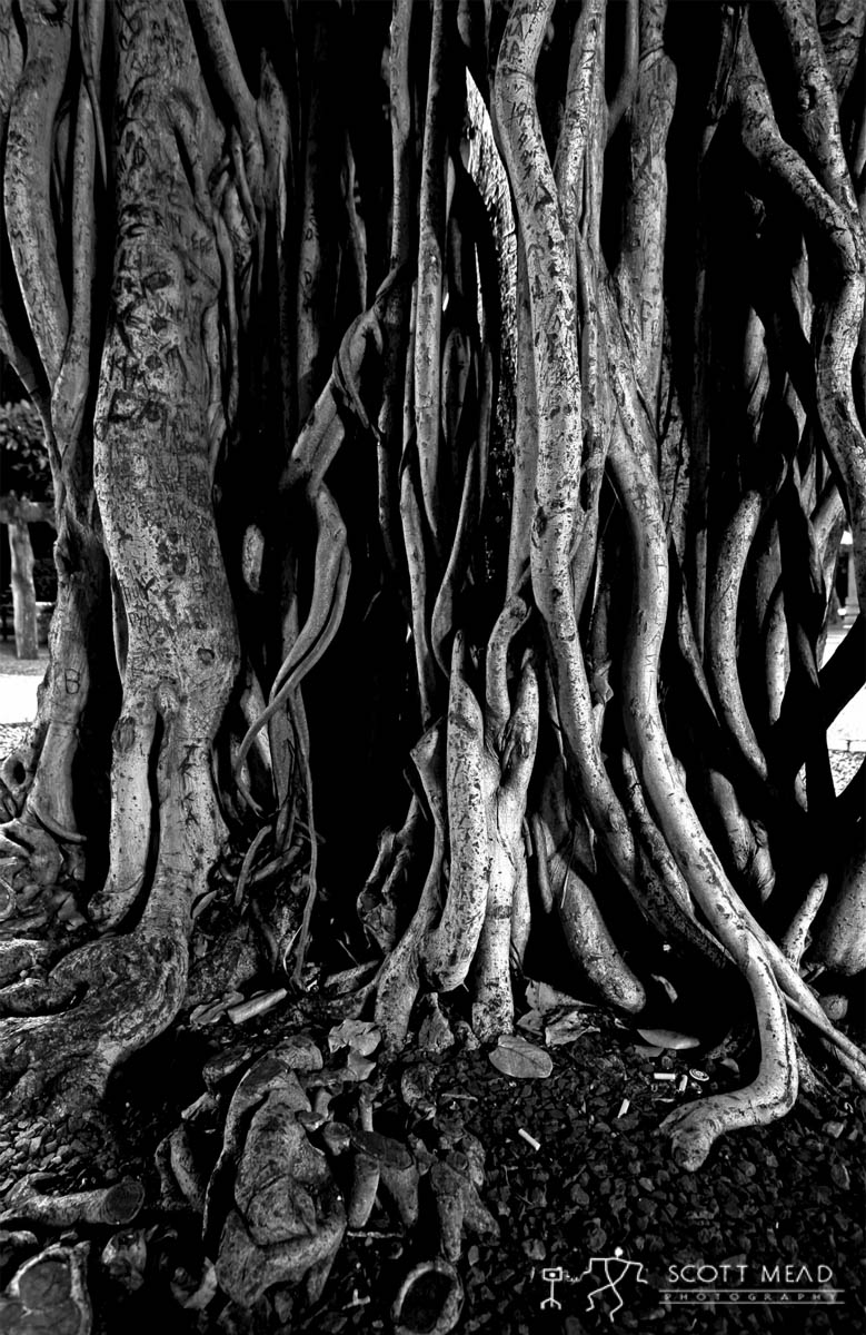 Scott Mead Photography | Banyan
