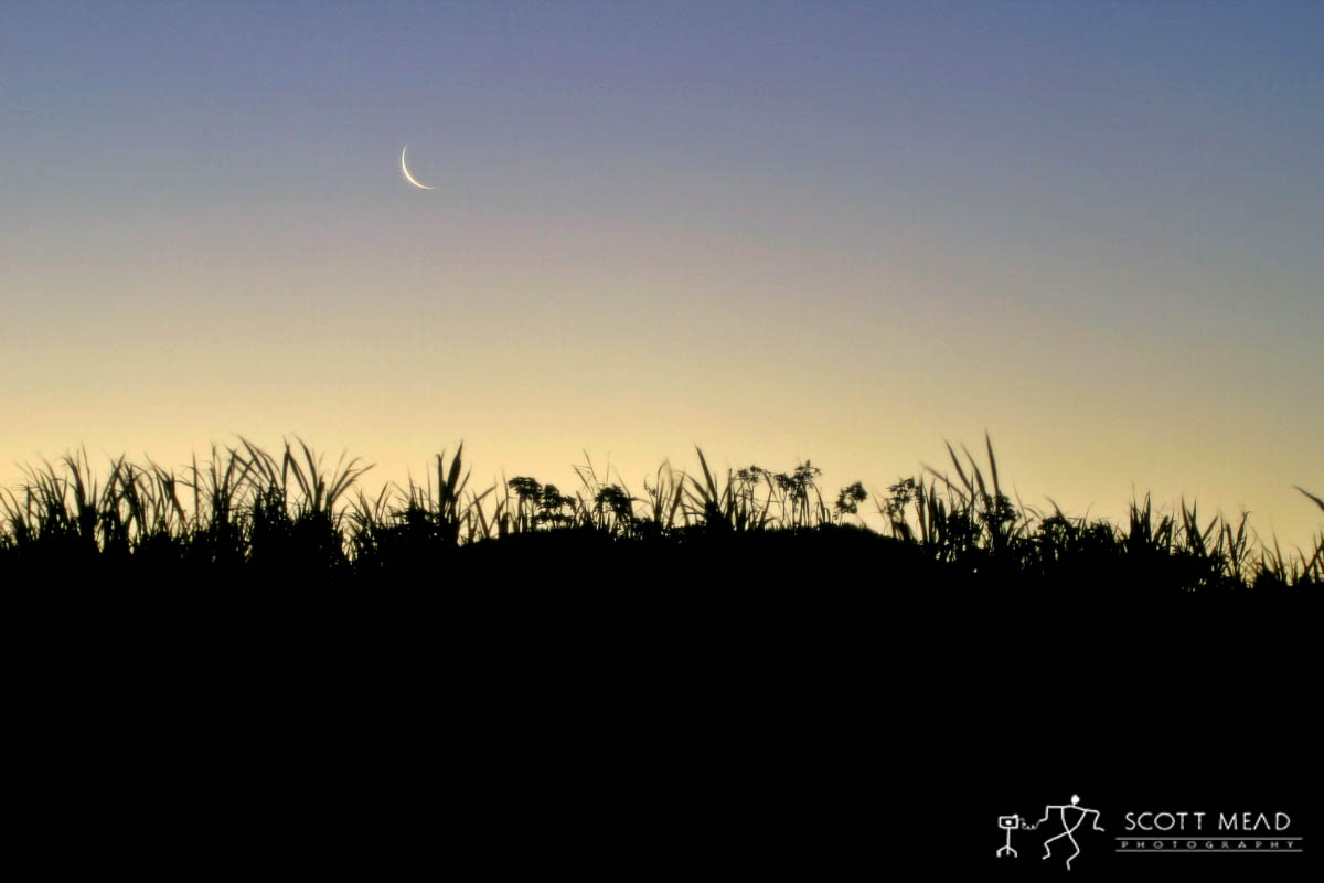 Scott Mead Photography | Cane Field Moonrise