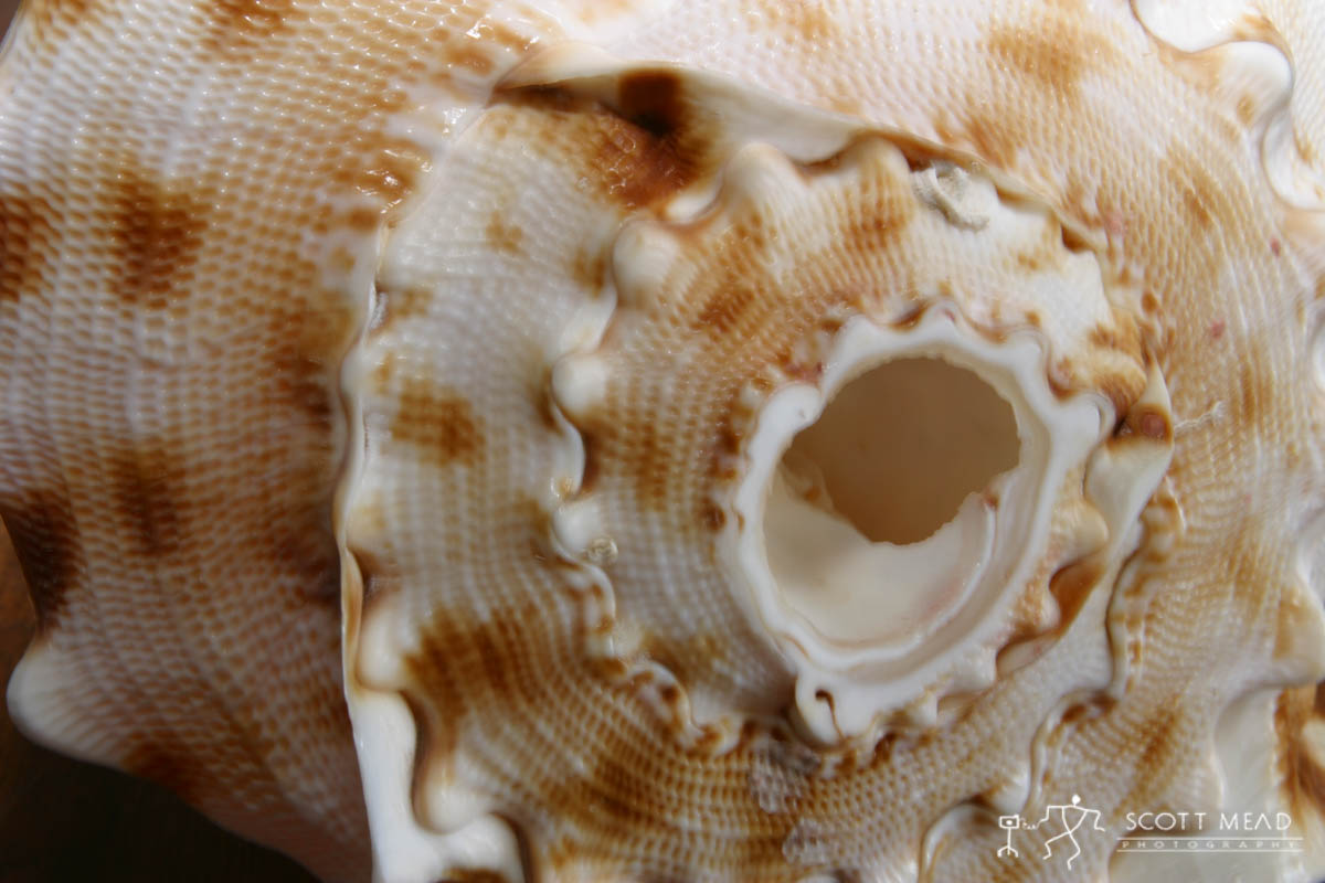 Scott Mead Photography | Conch