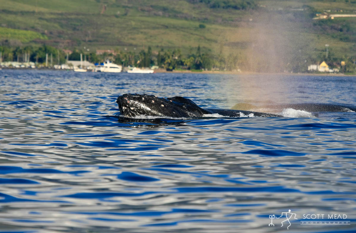 Scott Mead Photography | Cruisin Lahaina