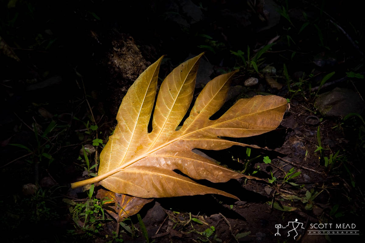 Scott Mead Photography | Fallen Leaf