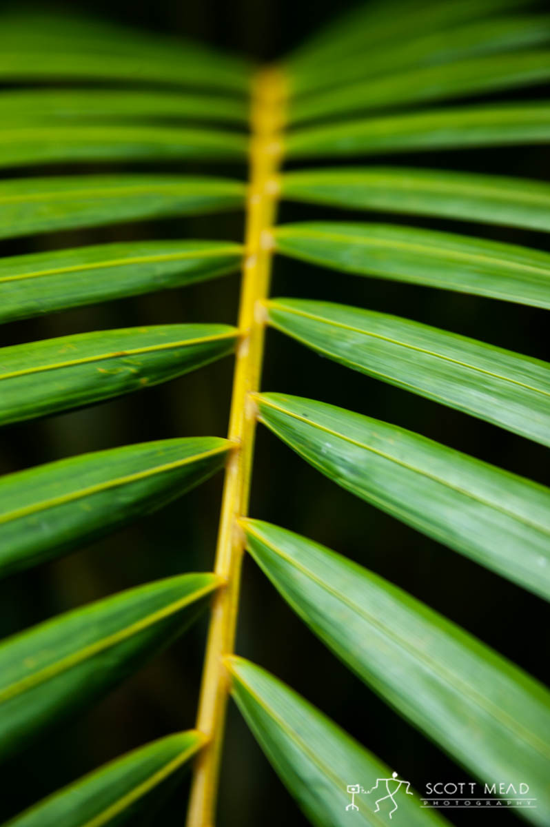Scott Mead Photography | Frond