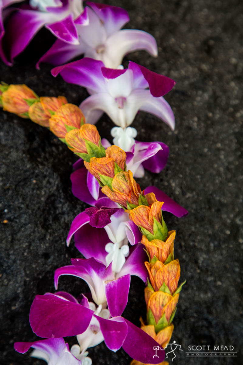 Scott Mead Photography | Illima Purple Orchid 1