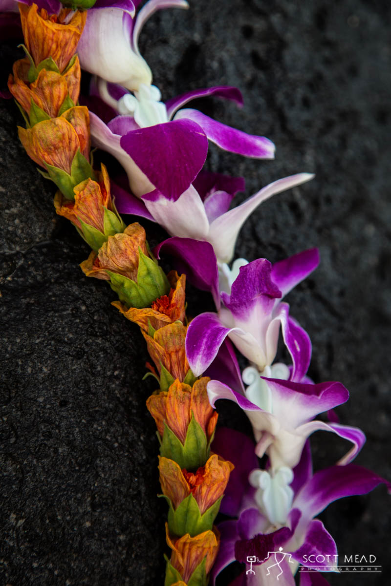 Scott Mead Photography | Illima Purple Orchid 2