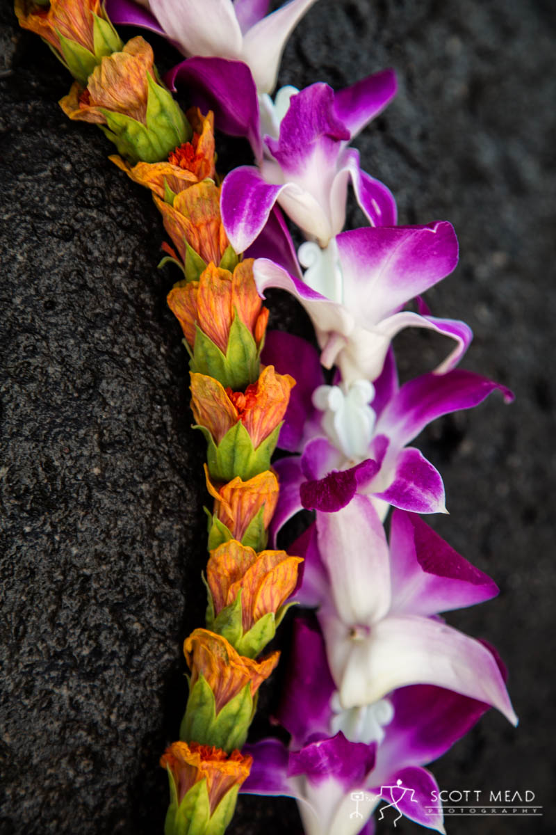 Scott Mead Photography | Illima Purple Orchid 3