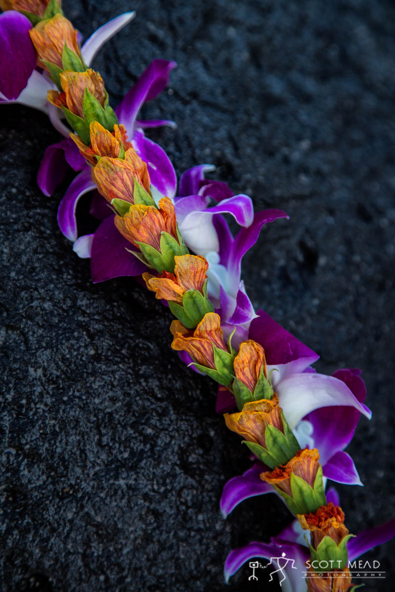 Scott Mead Photography | Illima Purple Orchid 4