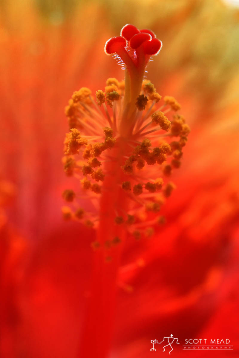 Scott Mead Photography | Inner Beauty