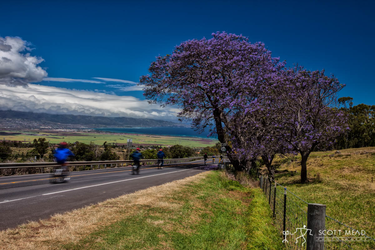 Scott Mead Photography | Jacaranda Ride