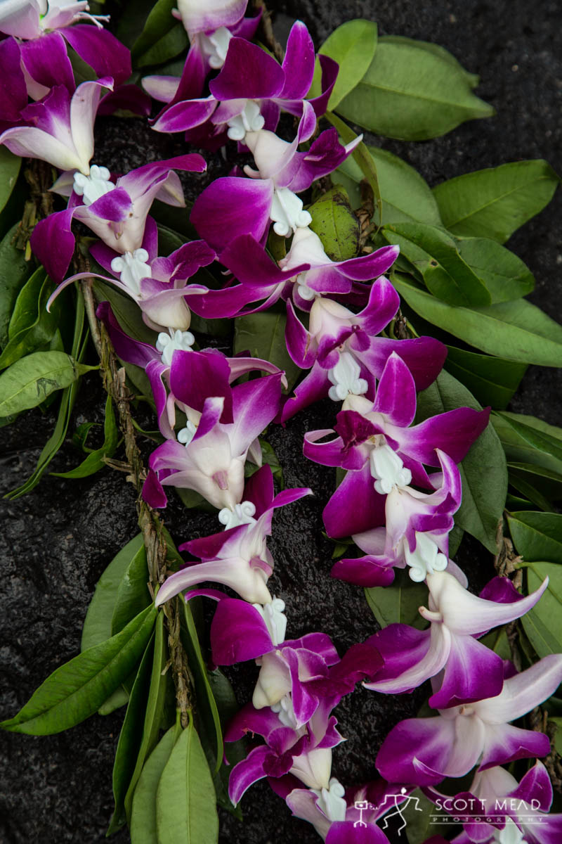 Scott Mead Photography | Maile Purple Orchid 1