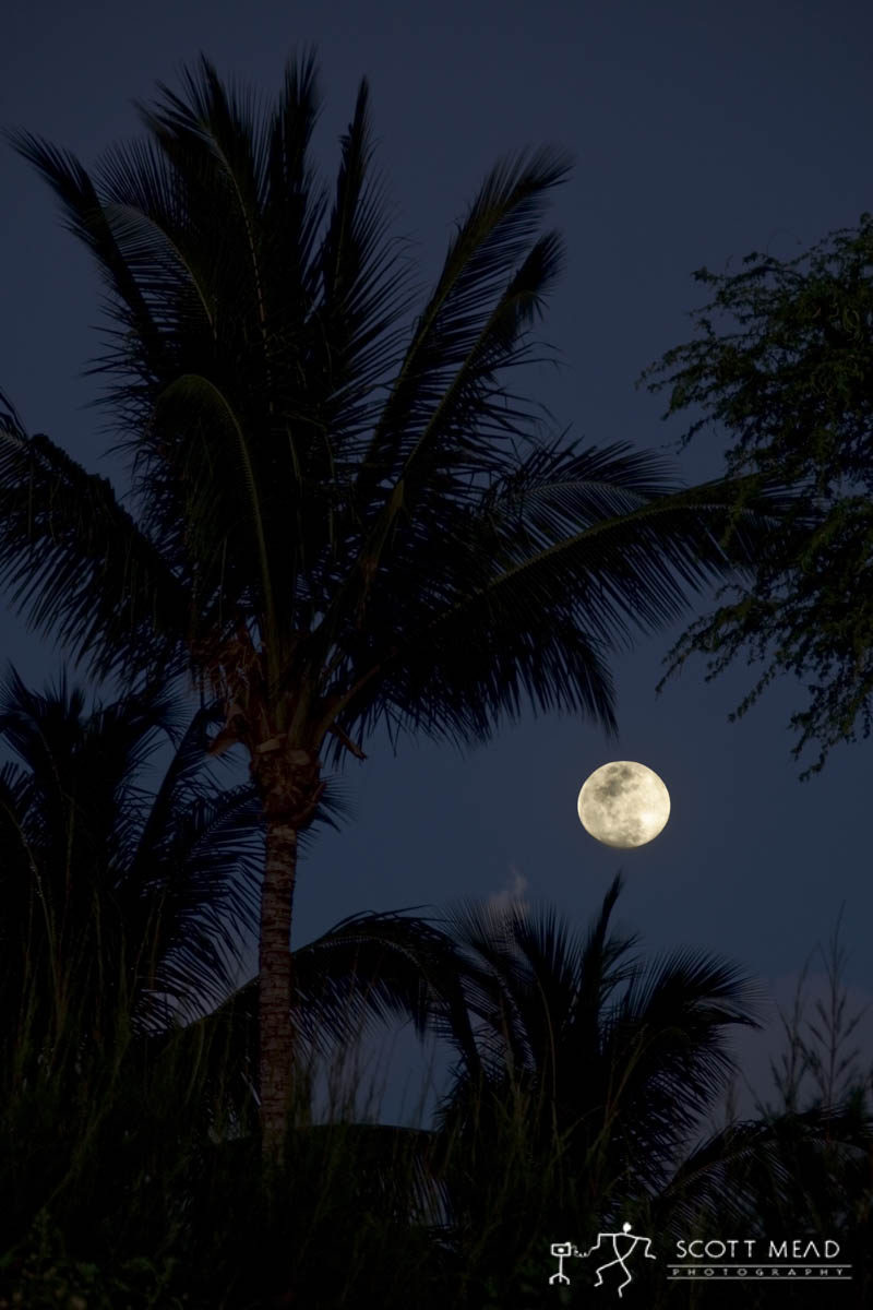 Scott Mead Photography | Moon Drenched Palms