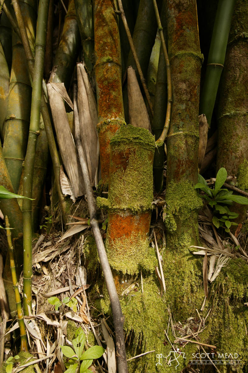 Scott Mead Photography | Moss Covered Bamboo