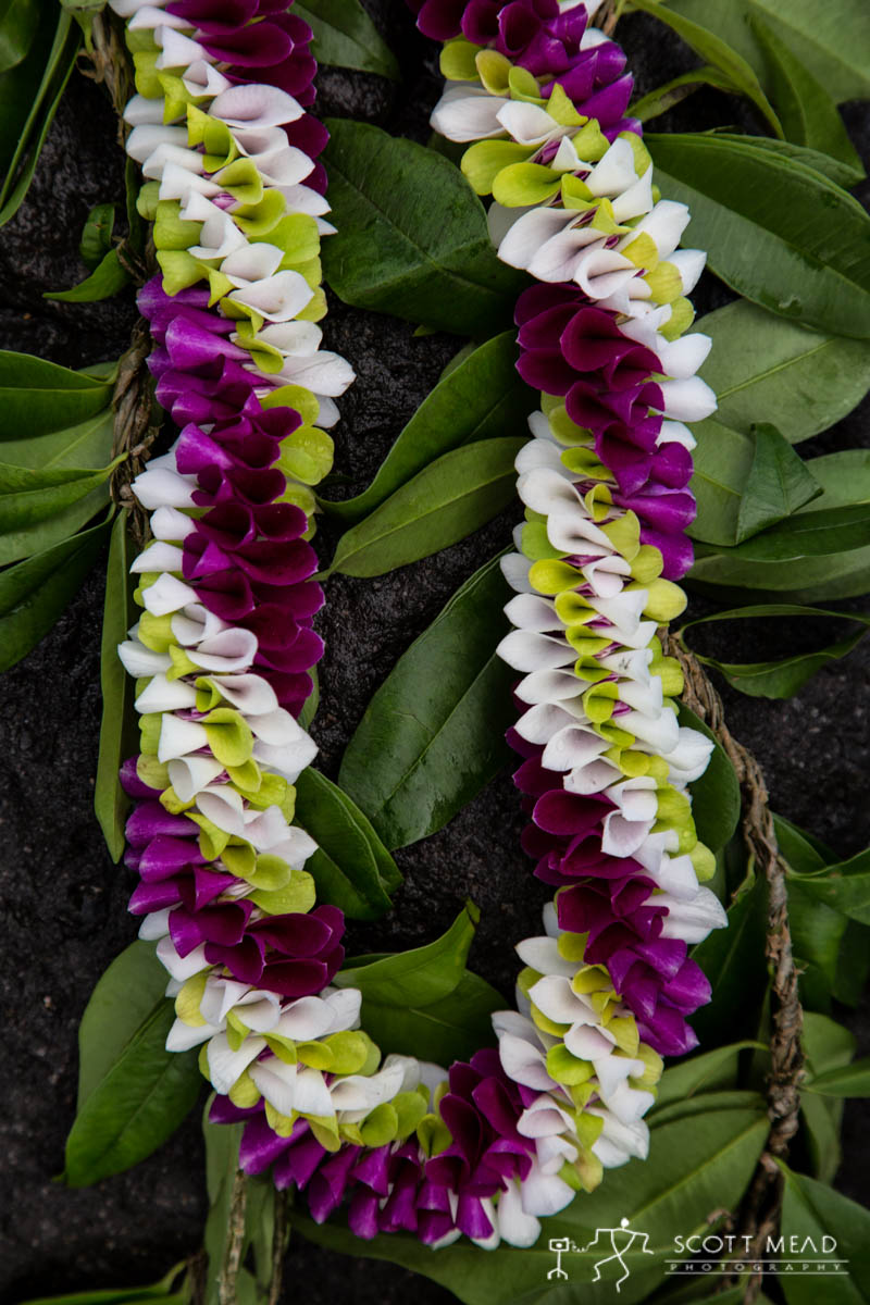 Scott Mead Photography | MultiOrchid Maile 2