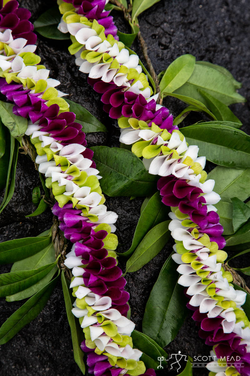 Scott Mead Photography | MultiOrchid Maile 3
