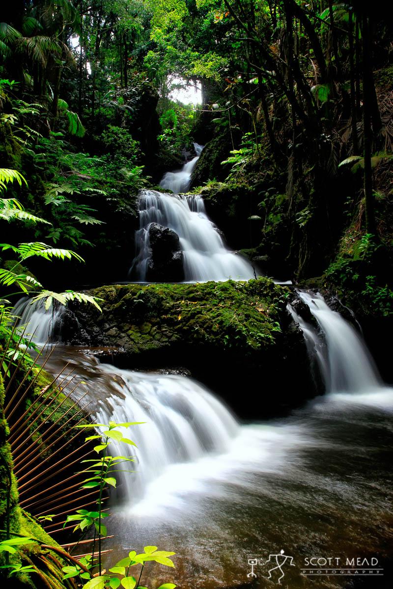 Scott Mead Photography | Onomea Falls
