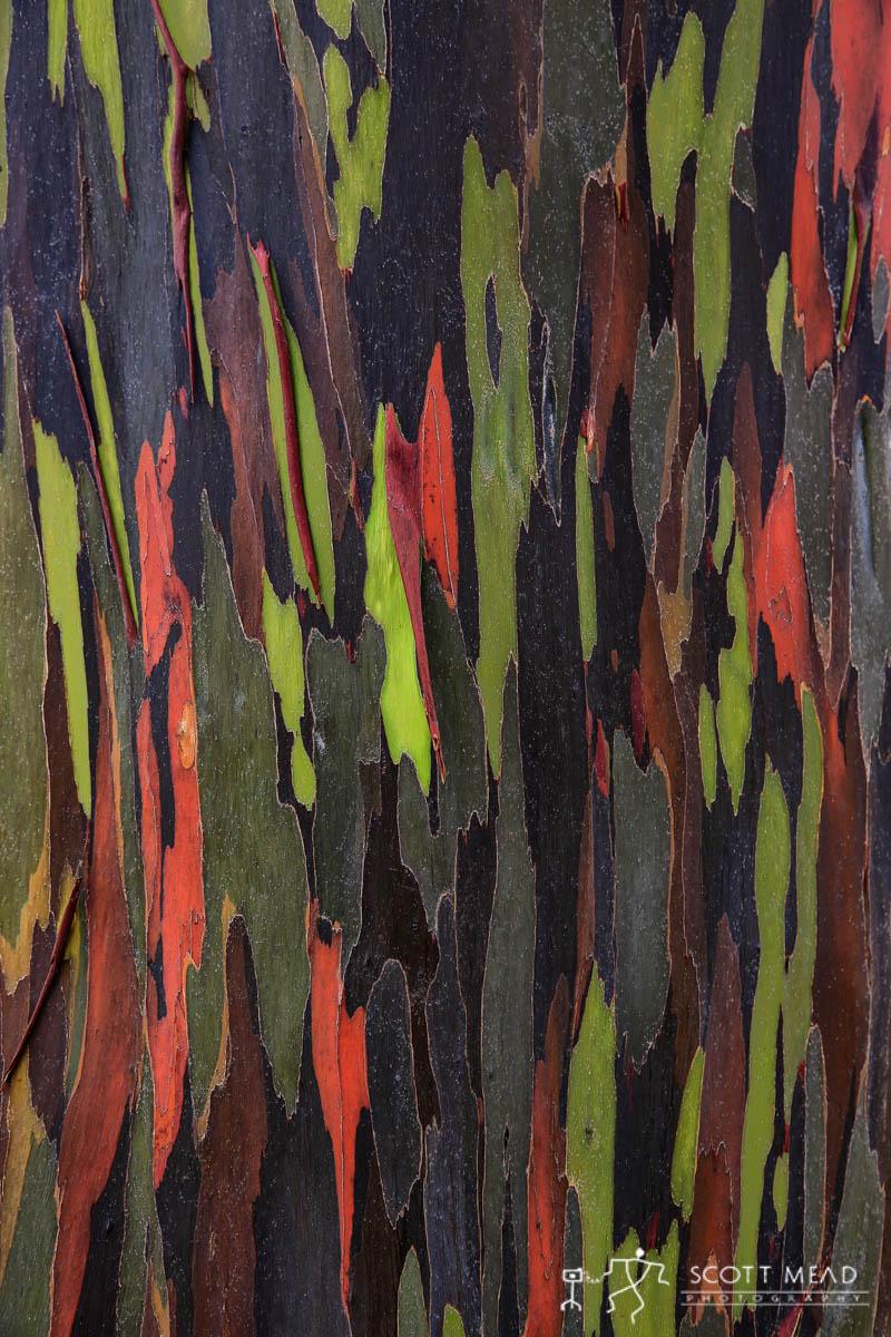 Scott Mead Photography | Painted Eucalyptus 5