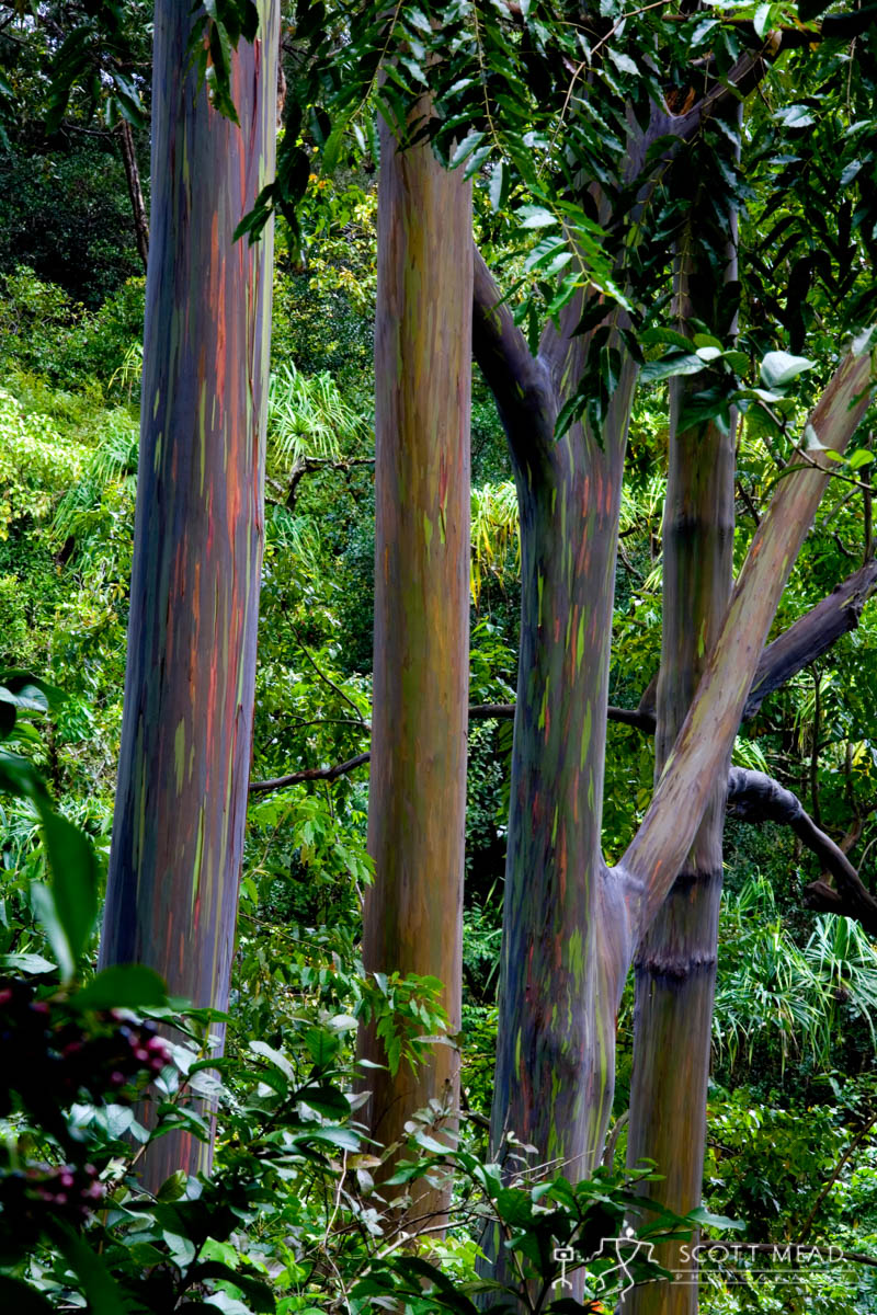 Scott Mead Photography | Painted Forest