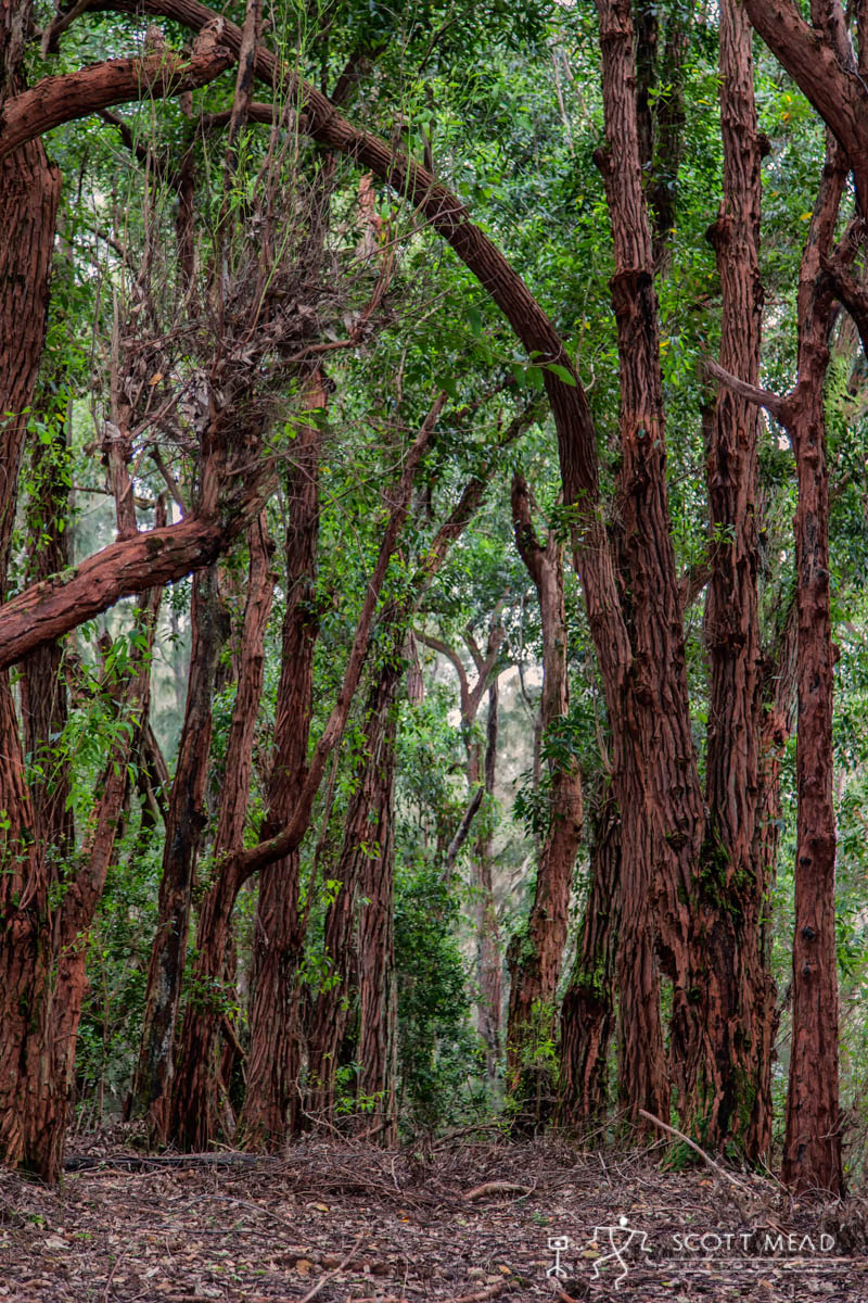 Scott Mead Photography   Palaau Forest