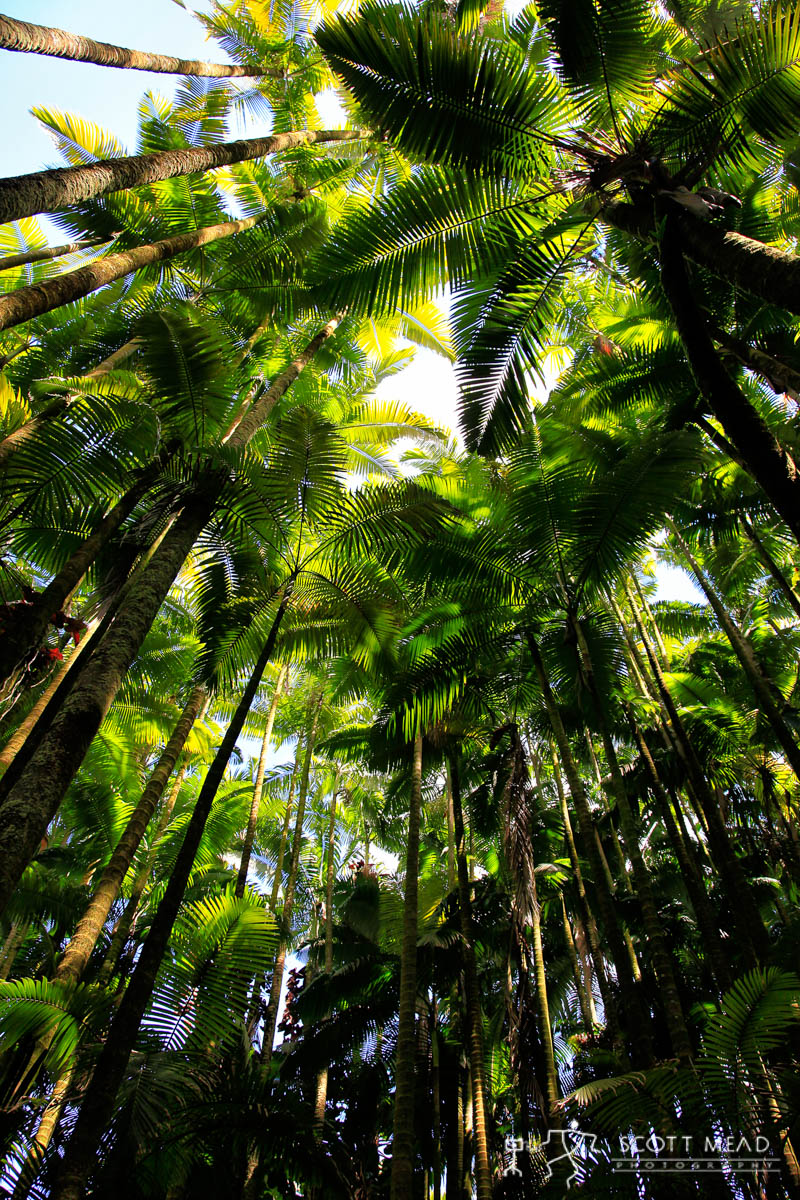 Scott Mead Photography   Palm Forest