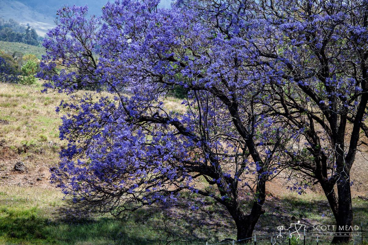 Scott Mead Photography   Purple Blooms