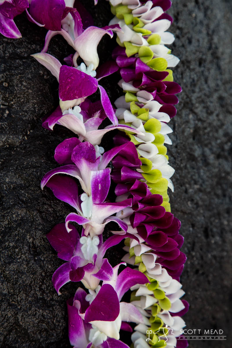 Scott Mead Photography | Purple Orchid Multi Orchid 3
