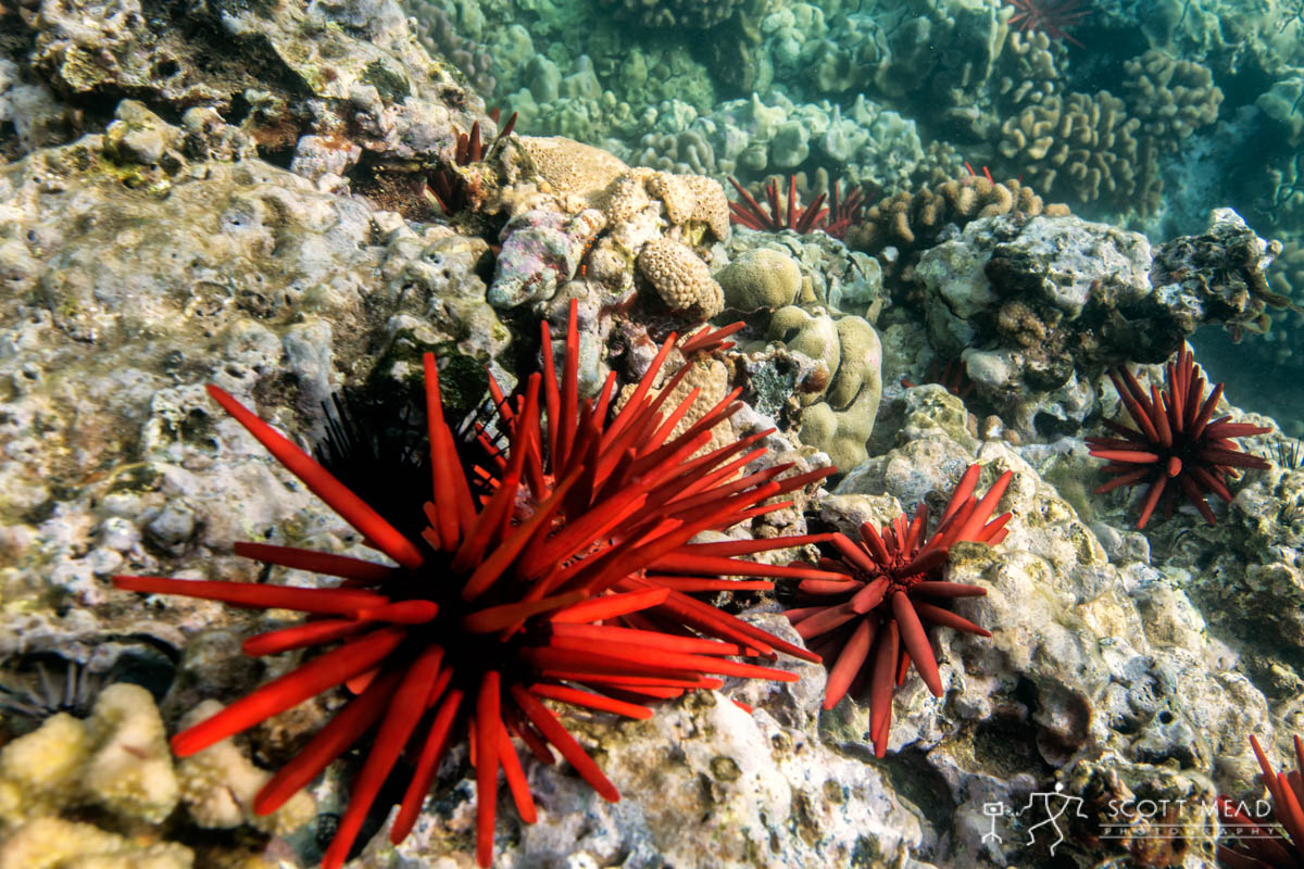 Scott Mead Photography | Red Urchin Trail