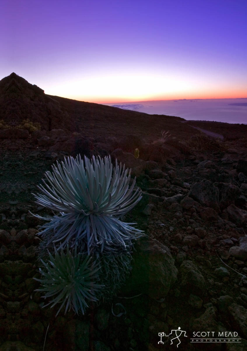 Scott Mead Photography | Silversword Sunset