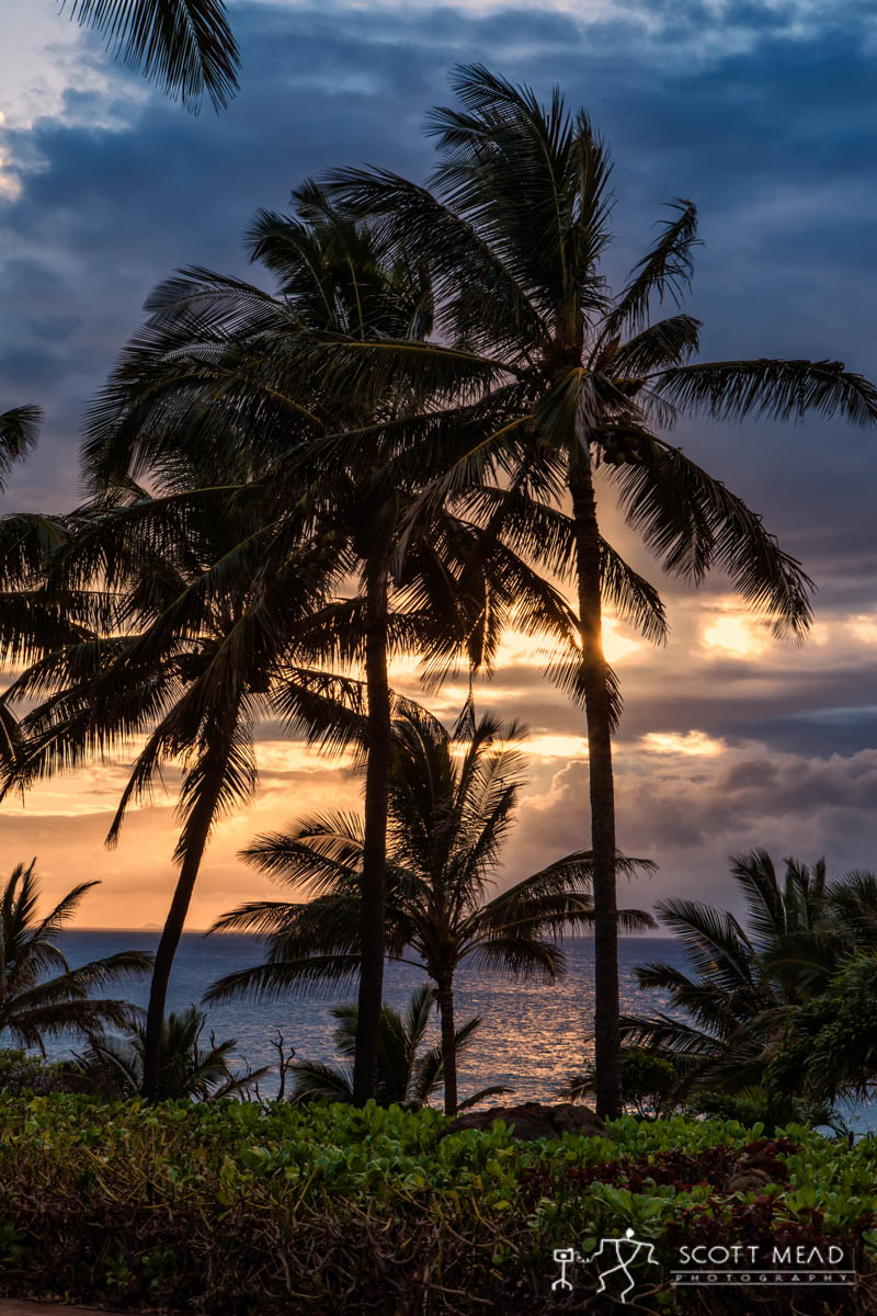 Scott Mead Photography | Swaying Palms