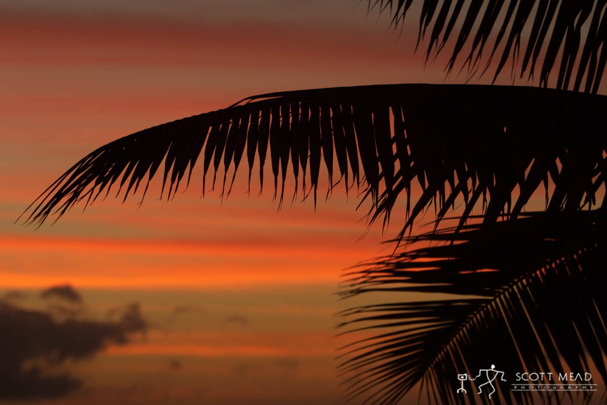 Scott Mead Photography | Twilight Fronds