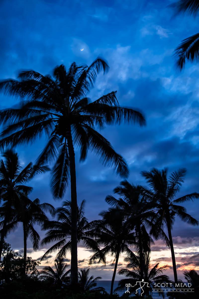 Scott Mead Photography | Twilight Grove