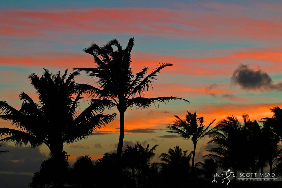 Scott Mead Photography | Twilight Palms
