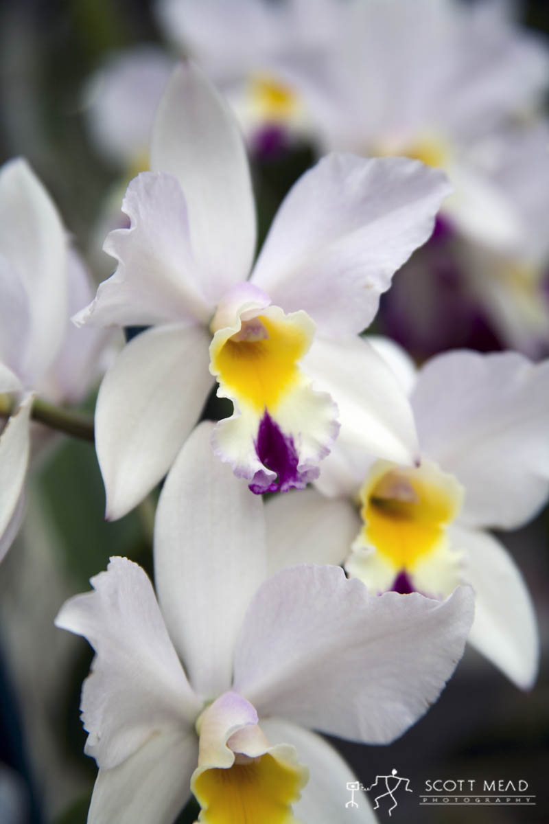 Scott Mead Photography | White Orchid