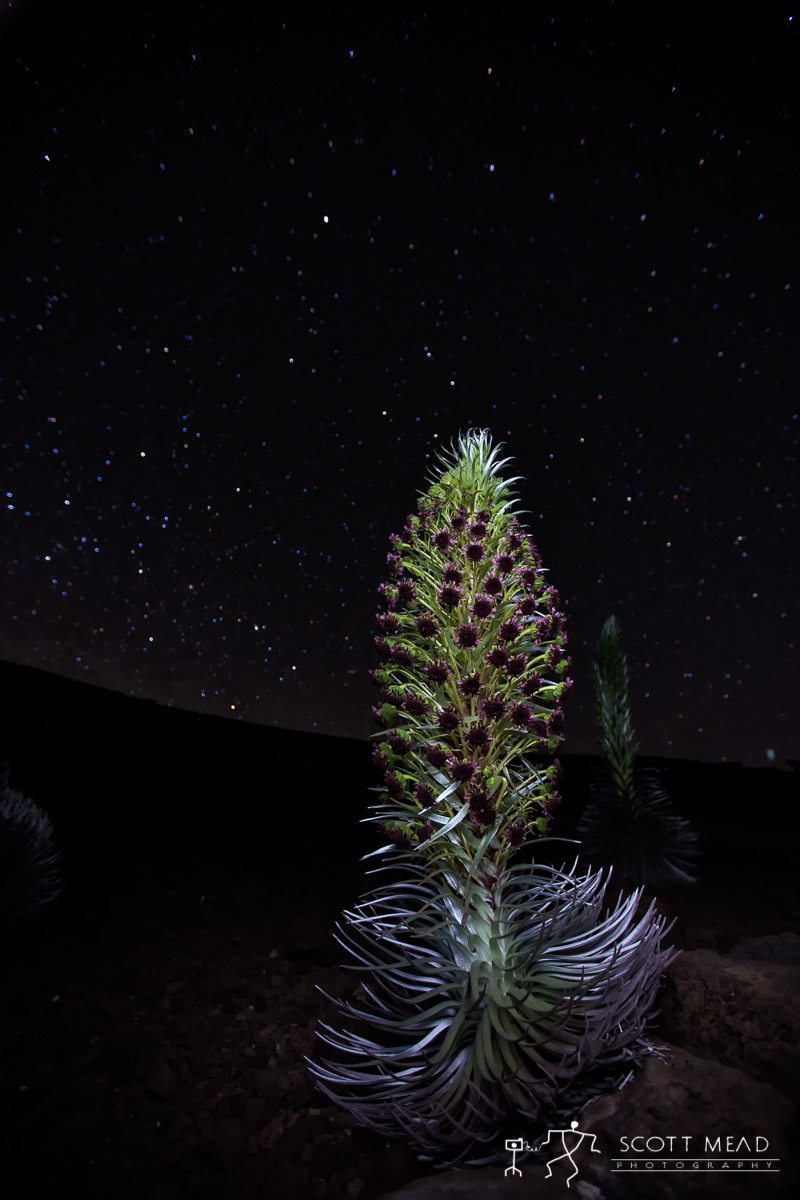 Scott Mead Photography | Ahinahina in the Night