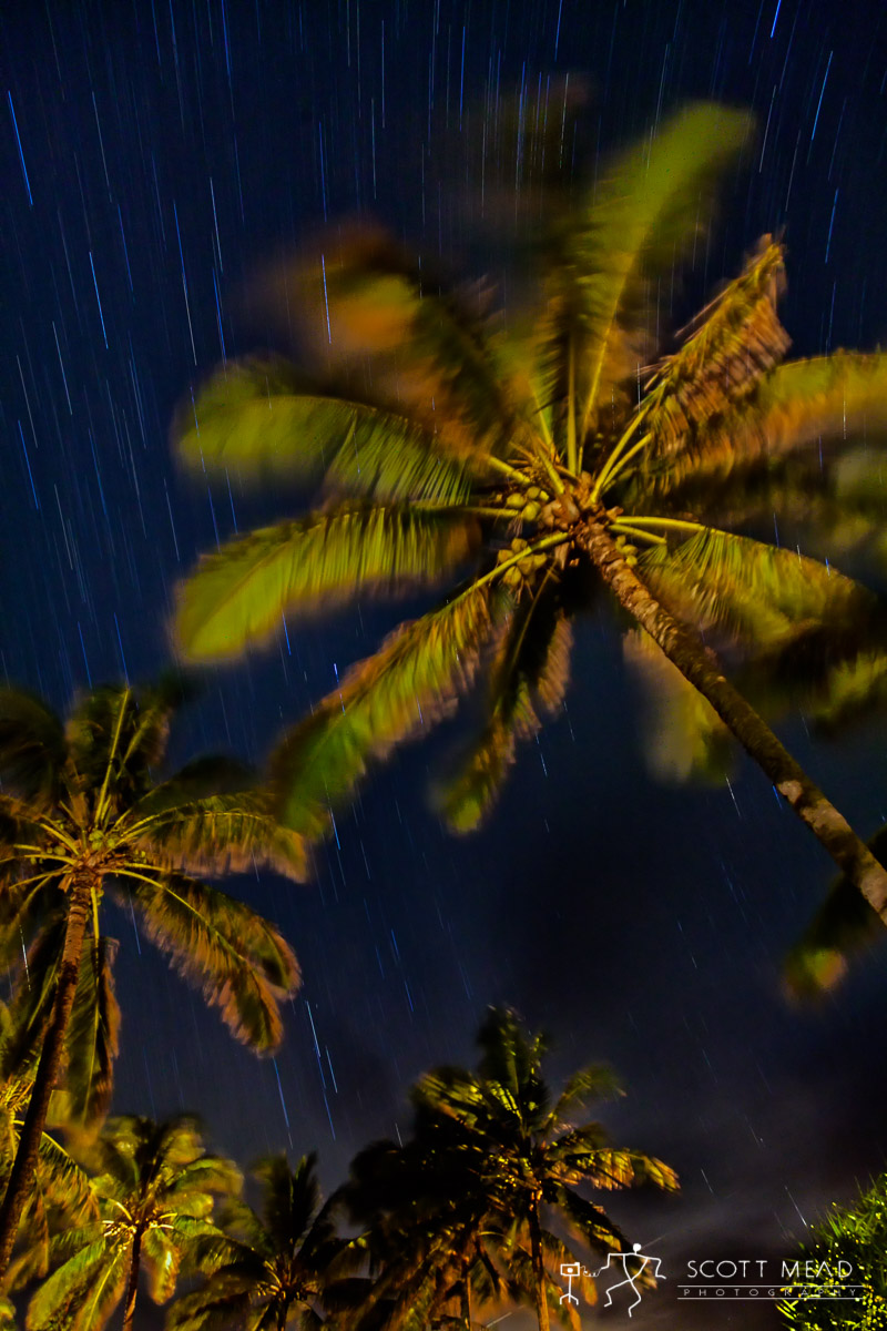 Scott Mead Photography | Starry Palms