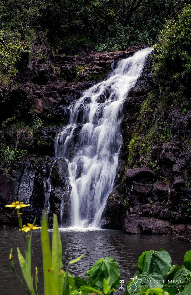 Scott Mead Photography | Waimea Falls